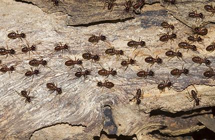 Termite Treatment Versus Termite Bait Monitoring Systems