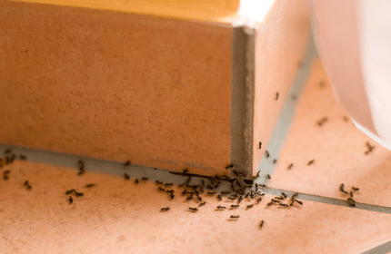6 Simple Ways to Ant-Proof Your Home