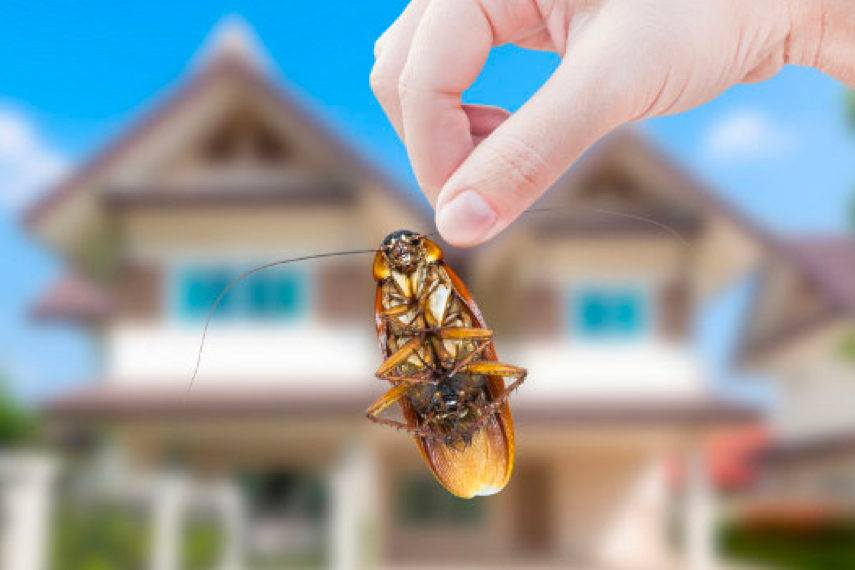 Pest Inspection Melbourne