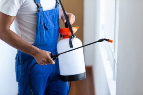 Bugs and Blooms – 6 Ways to Prepare Your Home For Pests this Spring