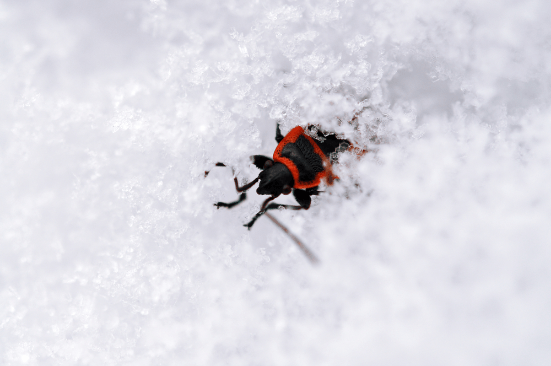 Cool Climate Critters – 6 Tips for Protecting Your Home From Pests this Winter