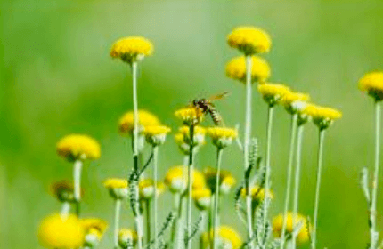 Garden Pests to Be Wary of this Season (And How to Deal with Them)