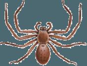 Spider Removal Melbourne