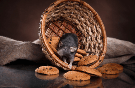 5 Signs of a Rat Infestation