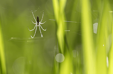 Spring Pests in Season