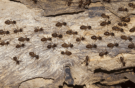 Termite Treatment Vs Termite Bait/Monitoring Systems