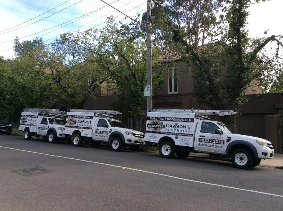 Termite Treatment in Toorak