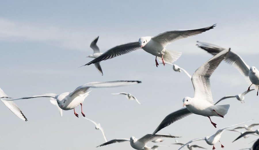 Top 3 Reasons You Should Call Bird Pest Control Immediately