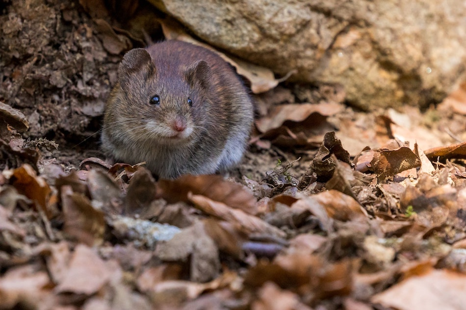 Dawson's Rodent Treatment Requests Up 180% Due To Surge In Rodent Numbers