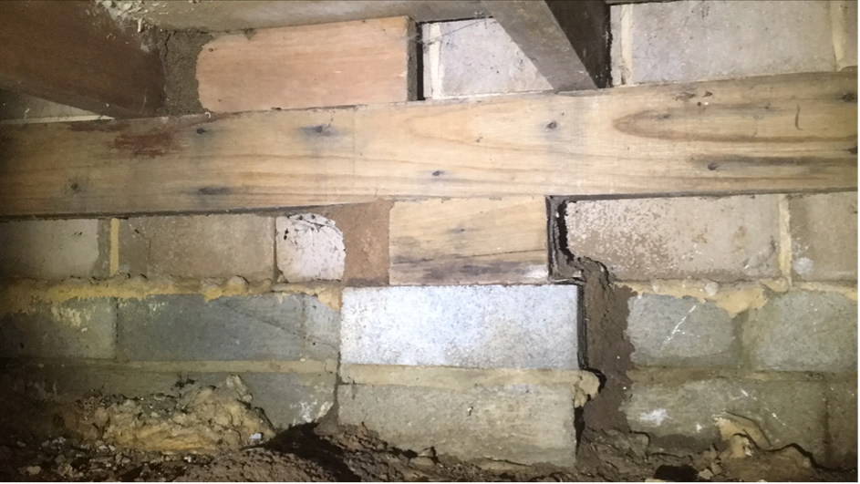 Termite Inspection in Yarragon South